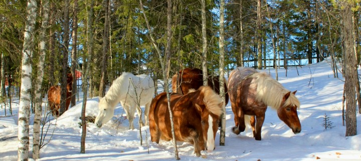 Empowerment and presence with horses